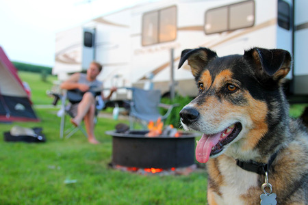 A German Shepherd dog is camping at a campground with his owner, a man who is playing guitar in the background