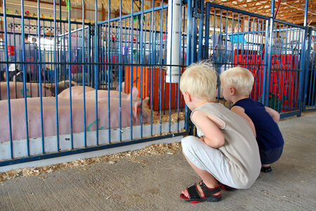 Two young children are looking at pink show pigs in a 4-H pen at an American County Fair