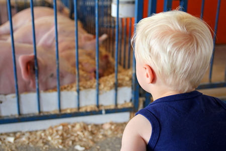 A young child is looking at a pig in a pen at an American County Fair