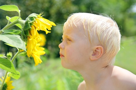 two year old: A young child is outside in the country smelling and looking at a sumflower on a sunny summer day. Stock Photo