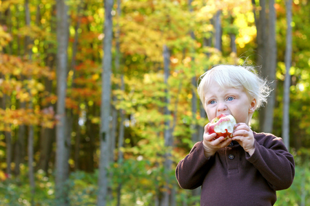 2 years old: A young child is eating a freshly harvested apple at an orchard in the Autumn Forest.