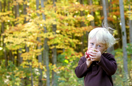 A cute little child is eating fresh fruit at an apple orchard in the Autumn forest.