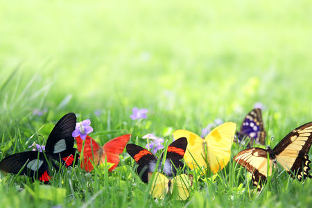 exotic butterflies: A variety of colorful exotic butterflies are framing the background of blurred spring green grass.