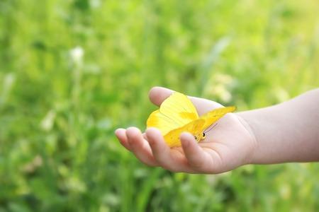 mariposa: Mano que sostiene la naranja del Infante Niño Barred Mariposa de azufre Outside in the Woods.