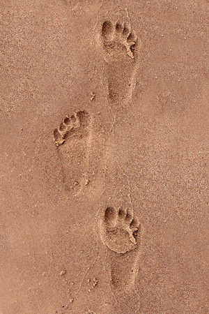 sand grains: Footprints of a child walking through the sand on a beach in the summer.