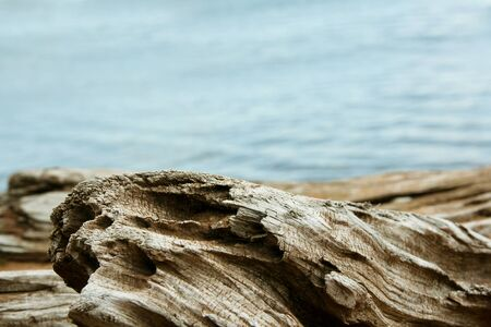 bordering: Twisted driftwood on the shore of Lake Superior bordering the bottom of water in the background. Stock Photo