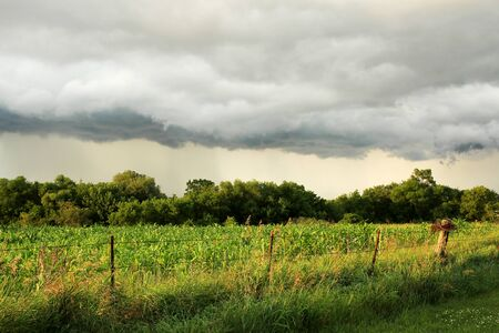 A dark Arcus Shelf Storm Cloud is stretched out in the sky over a midwest American cornfield and forest by a barbed wire fence.