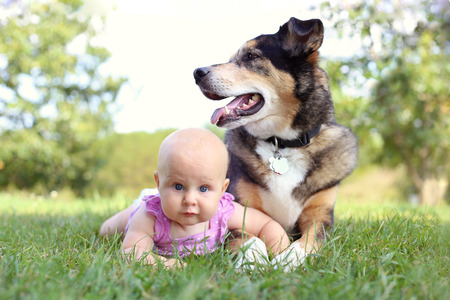 A cute 6 month old baby girl is laying outside in the grass holding hands with her German Shepherd Dog. Stockfoto