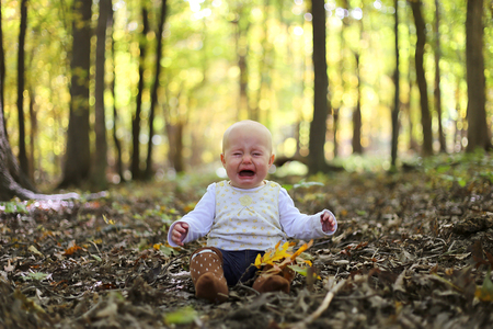 silver maple: A sad crying baby girl sits on the fallen leaves in a forest full of yellow colored Silver Maple trees in the Autumn.