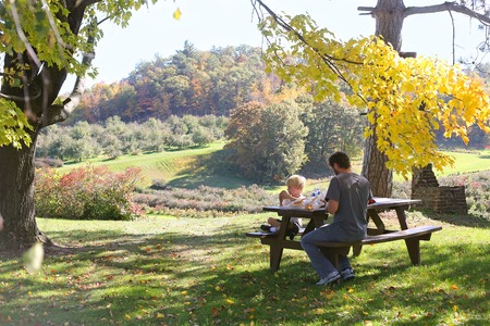 A father and son eat a picnic outside under a maple tree by a sweeping Landscape of Cain's Apple Orchard in Hixton Wisconsin, with Apple trees, blueberry Bushes and grape vinyard.