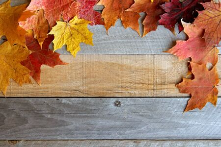 slats: A variety of yellow, orange, and red Autumn Maple leaves are bordering the top of a rustic wood board textured background.