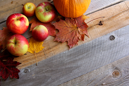 bordering: A variety of yellow, orange, and red Autumn Maple leaves, apples, and Pumpkins are bordering the top of a rustic wood board textured background.
