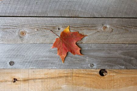 A single Autumn Sugar Maple leaf is in the middle of a rustic wood board textured background.