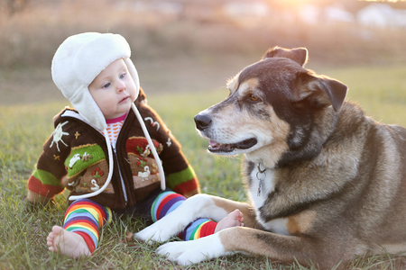 ouside: An adorable 8 month old baby girl is bundled up in a sweater and bomber hat looking lovinlgy at her pet German Shepherd dog as they sit ouside on a cold fall day.