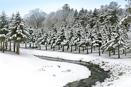pine creek: Freshly Fallen White snow covers the branches of a row of Pine Trees by a rocky river bend in the country. Stock Photo