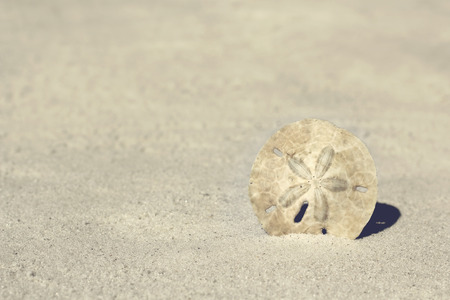 A white sand dollar is half burried in the white sand and framing the corner of a blurred background