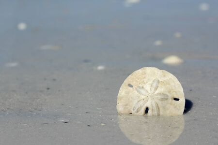 A dead bleached sand dollar test is bordering a background of sand and ocean water shore. Stock Photo