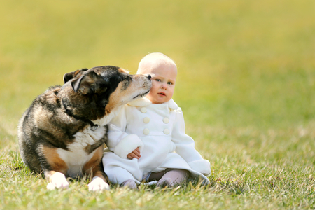 12 13: A precious 13 month old baby girl in a faux fur white peacoat, is sitting outside on the grass with her pet German Shepherd dog, as he kisses her cheek on a Spring day.