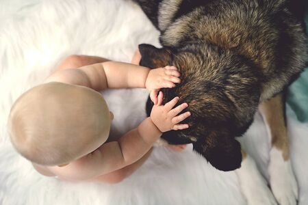 rescued: Overhead view of a 6 month old baby petting her rescued German Shepherd Mix breed dog on the ears.