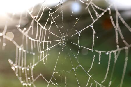 glistening: An Orb Shaped Spiderweb is glistening in the morning dew droplets of water on a foggy spring sunrise.