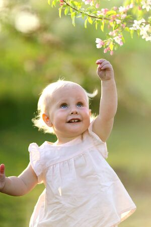 blonde haired: An adorable one year old blonde haired baby girl is reaching up to pick a flower from a crabapple tree at sunset on a spring day.