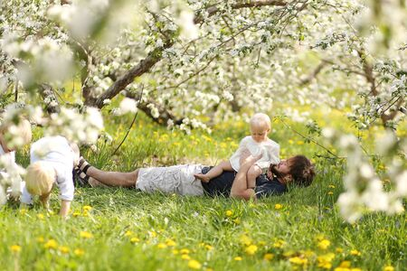 hugs: A Father is holding his baby girl on his lap as his two young boy children play under the flowering trees at an apple orchard on a spring day.