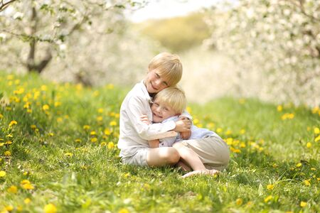blonde haired: Two cute, happy blonde haired brothers are sitting outside under the apple trees in a flower meadow, hugging.
