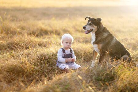 Una chica cortada bebé está sentado fuera en un campo de heno granja con su perro de raza Border Collie mezcla de pastor alemán rescatado al atardecer en un día de otoño. Foto de archivo - 67736587