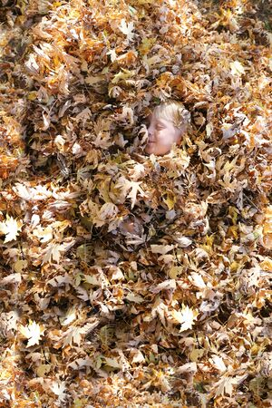 silver maple: A cute and happy young child is laying in a large pile of fall Maple leaves, with only his face peaking out.