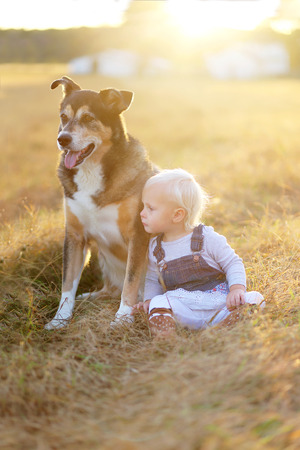 lovingly: A one year old baby girl is lovingly resting her head on her pet German Shepherd mix breed dog, as they sit in a farm field at the golden hour of suset on a fall evening.