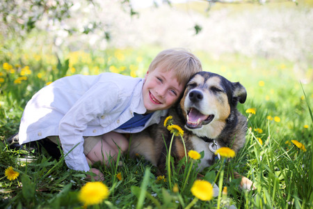 A happy little seven year old boys is smiling and hugging his pet German Shepherd Dog, as they relax under the Apple Trees in a flower meadow on a spring day.