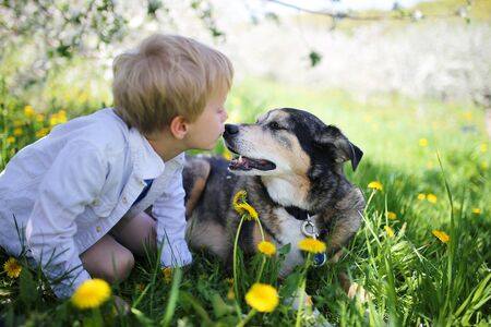 A sweet little boy is giving his rescued pet German Shepherd Dog a kiss on the nose as the relax outside in the flower meadow under the apple trees on a spring day. photo