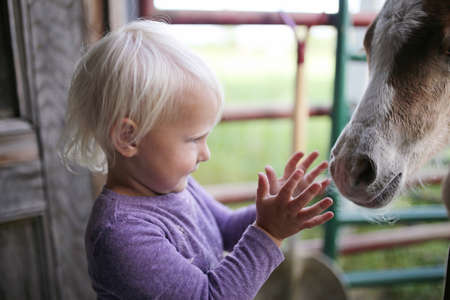 A little girl child is playing in a barn with a newborn baby horse foal.