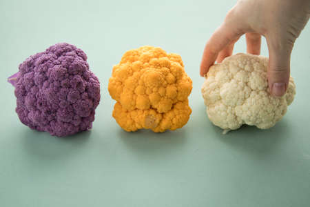 Woman choosing colorful rainbow cauliflower in purple, orange and white in row on pastel green background