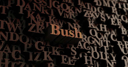 Bush - Wooden 3D rendered lettersmessage.  Can be used for an online banner ad or a print postcard.
