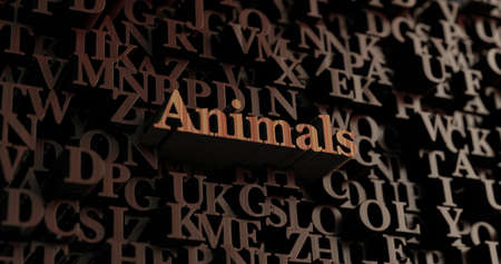 Animals - Wooden 3D rendered lettersmessage.  Can be used for an online banner ad or a print postcard.