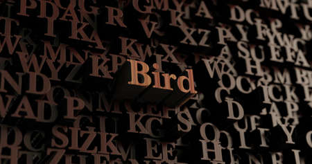 Bird - Wooden 3D rendered lettersmessage.  Can be used for an online banner ad or a print postcard.