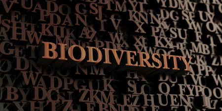 Biodiversity - Wooden 3D rendered lettersmessage.  Can be used for an online banner ad or a print postcard. Stok Fotoğraf