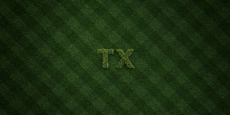 tx: TX - fresh Grass letters with flowers and dandelions - 3D rendered royalty free stock image. Can be used for online banner ads and direct mailers. Stock Photo