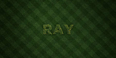 RAY - fresh Grass letters with flowers and dandelions - 3D rendered royalty free stock image. Can be used for online banner ads and direct mailers. Stock Photo