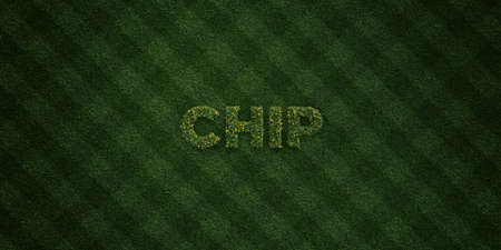turf flowers: CHIP - fresh Grass letters with flowers and dandelions - 3D rendered royalty free stock image. Can be used for online banner ads and direct mailers.