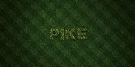 PIKE - fresh Grass letters with flowers and dandelions - 3D rendered royalty free stock image. Can be used for online banner ads and direct mailers.