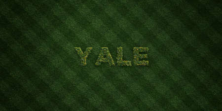 yale: YALE - fresh Grass letters with flowers and dandelions - 3D rendered royalty free stock image. Can be used for online banner ads and direct mailers. Stock Photo