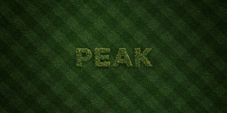 PEAK - fresh Grass letters with flowers and dandelions - 3D rendered royalty free stock image. Can be used for online banner ads and direct mailers. Banco de Imagens