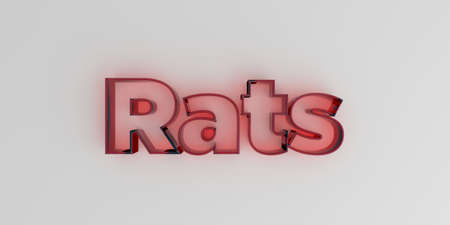 royalty free: Rats - Red glass text on white background - 3D rendered royalty free stock image.