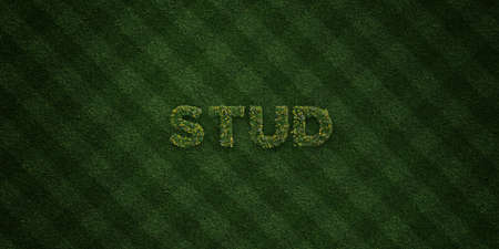 STUD - fresh Grass letters with flowers and dandelions - 3D rendered royalty free stock image. Can be used for online banner ads and direct mailers. Reklamní fotografie - 72573750