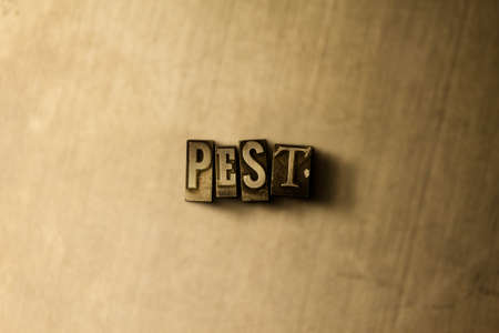 PEST - close-up of grungy vintage typeset word on metal backdrop. Royalty free stock illustration.  Can be used for online banner ads and direct mail.