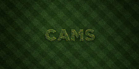 cams: CAMS - fresh Grass letters with flowers and dandelions - 3D rendered royalty free stock image. Can be used for online banner ads and direct mailers.