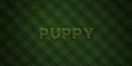 PUPPY - fresh Grass letters with flowers and dandelions - 3D rendered royalty free stock image. Can be used for online banner ads and direct mailers. Stock Photo