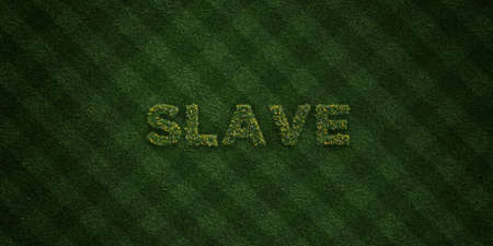 SLAVE - fresh Grass letters with flowers and dandelions - 3D rendered royalty free stock image. Can be used for online banner ads and direct mailers. Foto de archivo